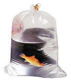 "12 x Plastic fish transport bags 12"" x 24"" for the bigger fish."
